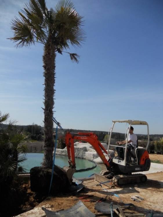 plantation de palmiers par le paysagiste de fuveau paysagiste les jardins de romain aix en. Black Bedroom Furniture Sets. Home Design Ideas