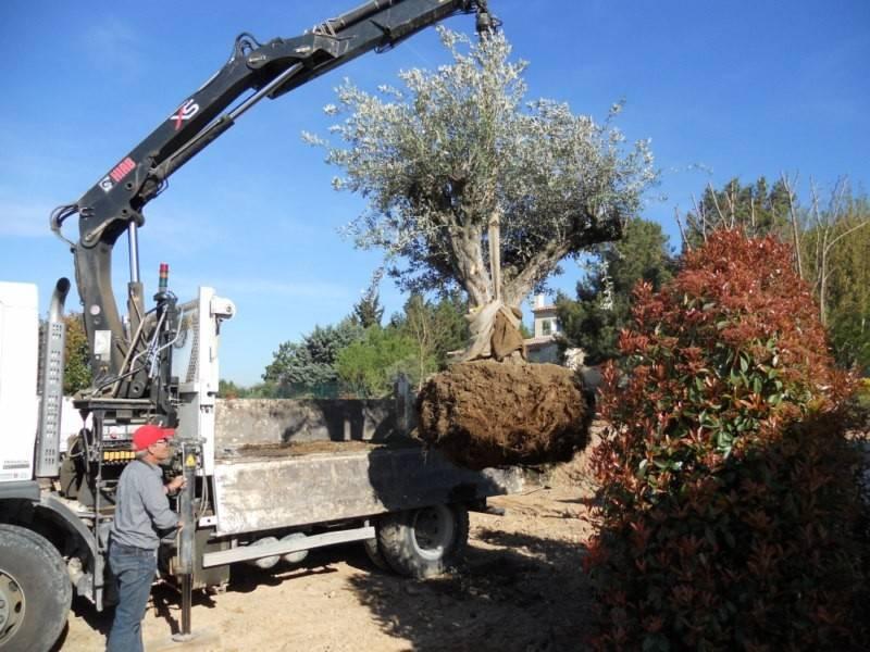 plantation d 39 un olivier par le paysagiste de fuveau artisan paysagiste aix en provence. Black Bedroom Furniture Sets. Home Design Ideas