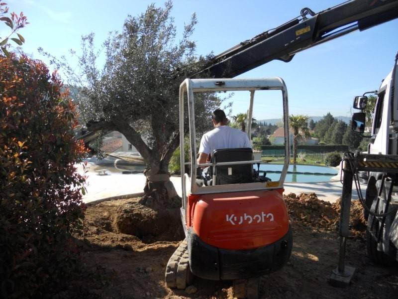 plantation d 39 un olivier par le paysagiste de fuveau paysagiste les jardins de romain aix en. Black Bedroom Furniture Sets. Home Design Ideas